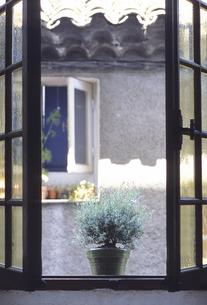 窓辺のローズマリーの写真素材 [FYI04185926]