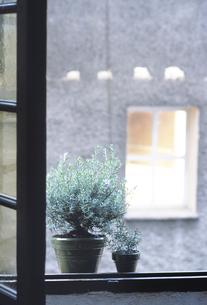 窓辺のローズマリーの写真素材 [FYI04185927]