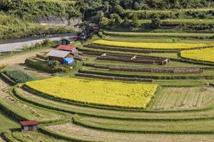 日本の風景、和歌山県秋のあらぎ島の写真素材 [FYI04186217]