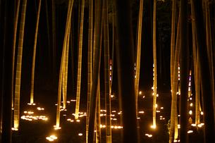 竹林ライトアップ(小机城址市民の森)の写真素材 [FYI04186317]