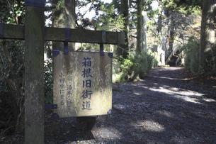 箱根旧街道の写真素材 [FYI04187403]