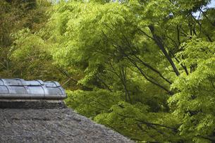 新緑と藁屋根の写真素材 [FYI04187724]