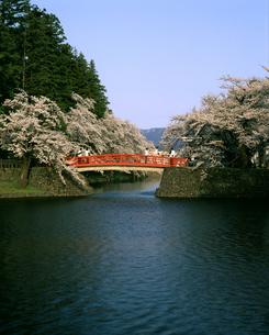 米沢城址の桜の写真素材 [FYI04188013]