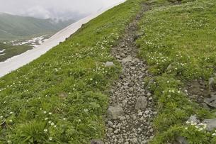 登山道の写真素材 [FYI04189019]