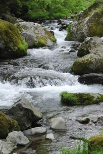渓流の写真素材 [FYI04189117]