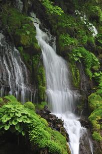 滝の写真素材 [FYI04189181]
