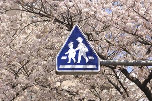 桜と道路標識の写真素材 [FYI04189543]