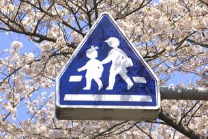桜と道路標識の写真素材 [FYI04189544]