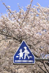 桜と道路標識の写真素材 [FYI04189545]