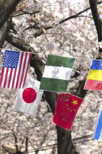 桜と万国旗の写真素材 [FYI04189546]