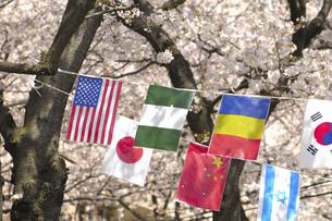 桜と万国旗の写真素材 [FYI04189547]