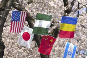 桜と万国旗の写真素材 [FYI04189548]