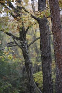 秋の森の写真素材 [FYI04189810]