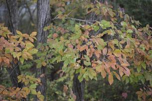 秋の森の写真素材 [FYI04189817]