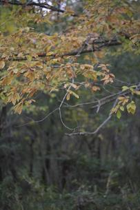 秋の森の写真素材 [FYI04189818]