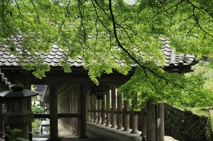 新緑の長谷寺の写真素材 [FYI04189990]