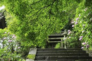 新緑の長谷寺の写真素材 [FYI04189992]