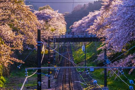 春の山北駅(神奈川県足柄上郡)の写真素材 [FYI04190562]