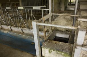 六甲牧場の牛舎の写真素材 [FYI04190784]