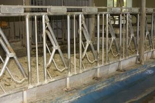 六甲牧場の牛舎の写真素材 [FYI04190785]