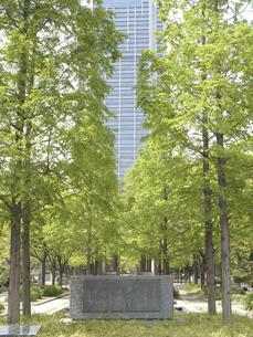 神戸東遊園地の並木と神戸市役所の写真素材 [FYI04190988]