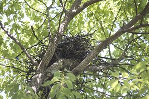 公園の樹木の枝の鳥の巣の写真素材 [FYI04191328]