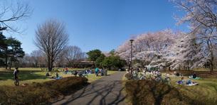 桜満開の野川公園の写真素材 [FYI04192467]