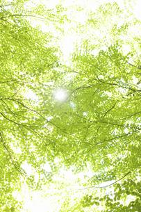 新緑の写真素材 [FYI04193346]