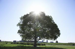 平原と一本の木の写真素材 [FYI04194679]