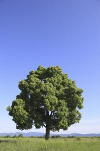 平原と一本の木の写真素材 [FYI04194681]