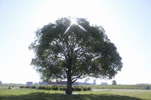 平原と一本の木の写真素材 [FYI04194684]