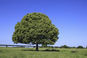 平原と一本の木の写真素材 [FYI04194688]