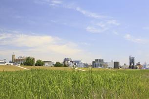 草原と町並の写真素材 [FYI04194723]