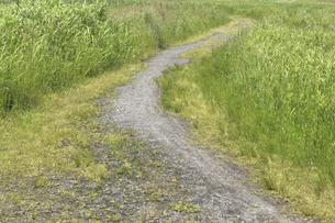 草原と小径の写真素材 [FYI04194735]