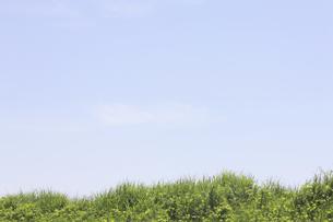 草原と空の写真素材 [FYI04194742]