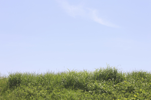 草原と空の写真素材 [FYI04194744]