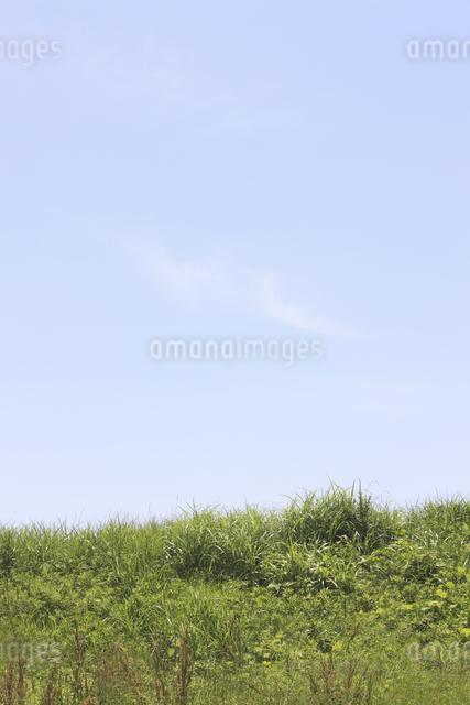 草原と空の写真素材 [FYI04194745]