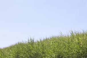 草原と空の写真素材 [FYI04194752]