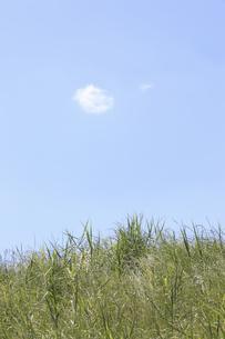 草原と空の写真素材 [FYI04194753]