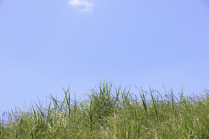 草原と空の写真素材 [FYI04194756]