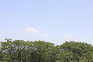 木立と空の写真素材 [FYI04194757]