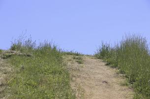 草原と小径の写真素材 [FYI04194759]