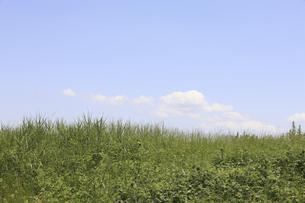 草原と空の写真素材 [FYI04194761]