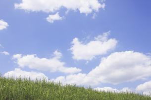 草原と空の写真素材 [FYI04194781]
