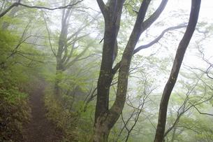 ブナ林の山道の写真素材 [FYI04195688]
