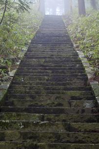朝もやの石段の写真素材 [FYI04195697]