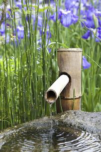 手水鉢と花菖蒲の写真素材 [FYI04196028]