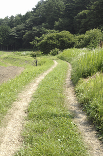 田舎の小道の写真素材 [FYI04200991]