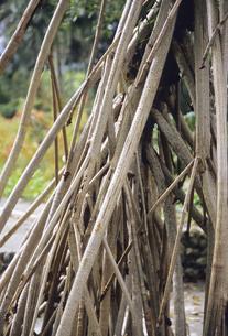 マングローブの根の写真素材 [FYI04201538]