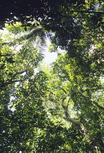 西表島の森の写真素材 [FYI04201548]